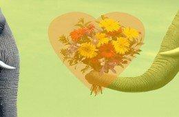 Romanticismo animale, corteggiamento galante