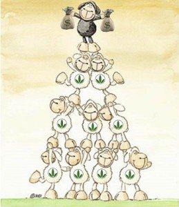 Herbalife truffa piramidale