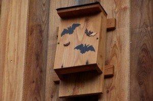 bat box2