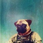 animali spaziali