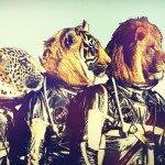 animali astronauti