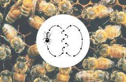 Passo di danza api per comunicare