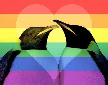 animali-gay-pinguini