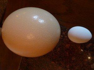 Uovo più grande del mondo