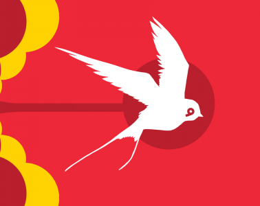 animali da record uccelli