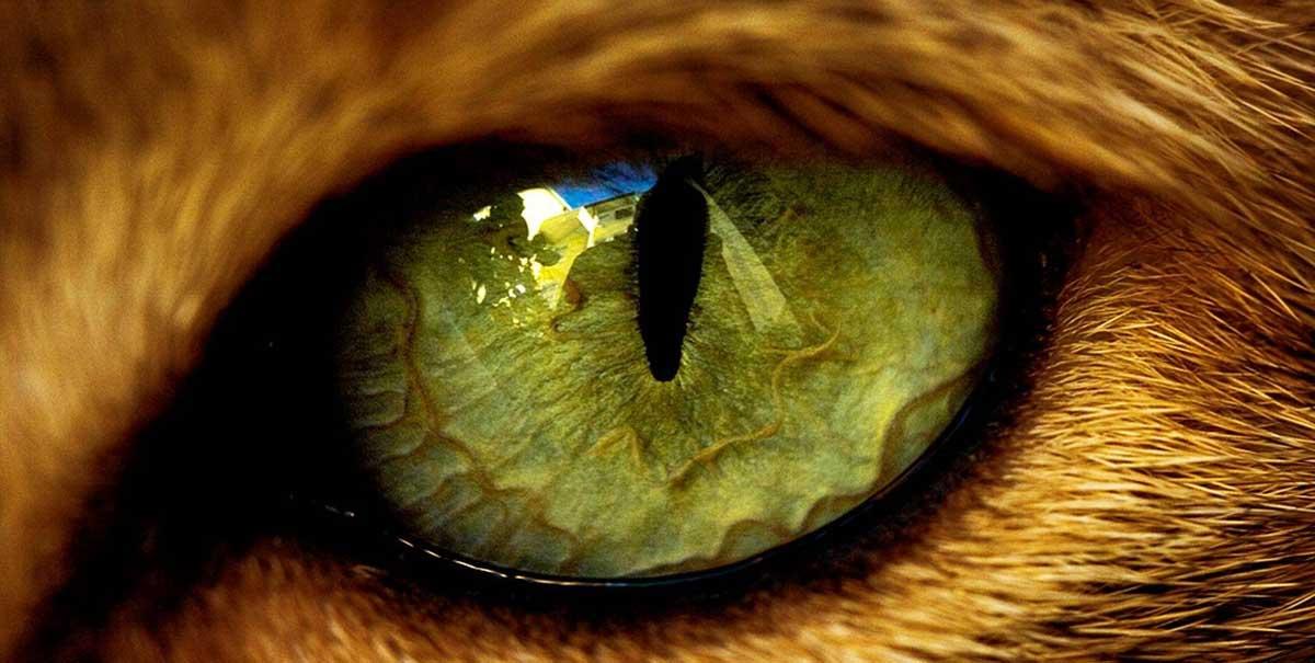 occhi di felino
