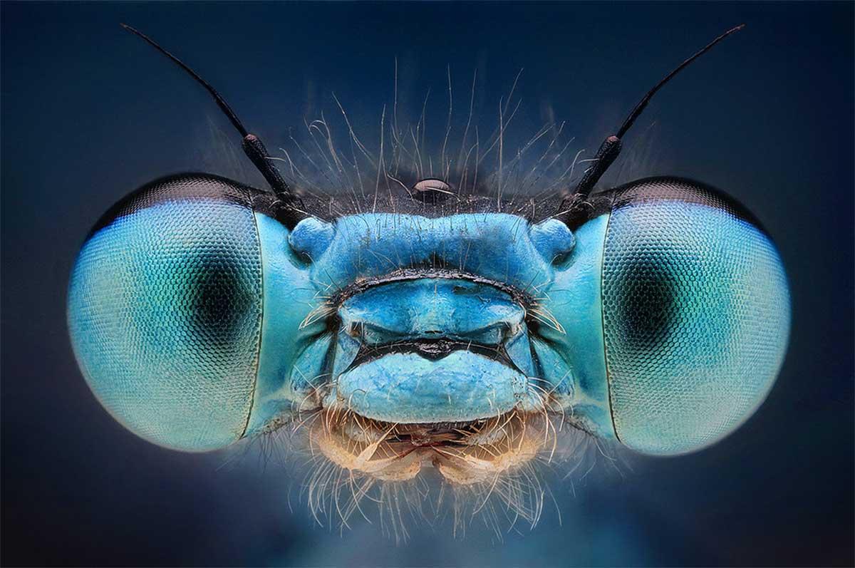 libellula occhi